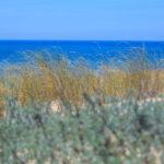 Dune, kyat et océan à la plage de la Garonne au Cap Ferret