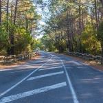 Route forestière du Truc Vert