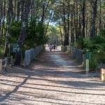 Chemin vers la plage du Truc Vert au Cap Ferret